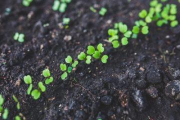 תרומה לעמותה – 15 סיבות למה לתרומות קטנות יש ערך גדול
